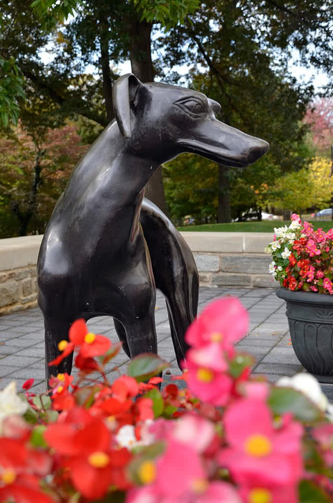 A bronze greyhound statue with red flowers in the foreground