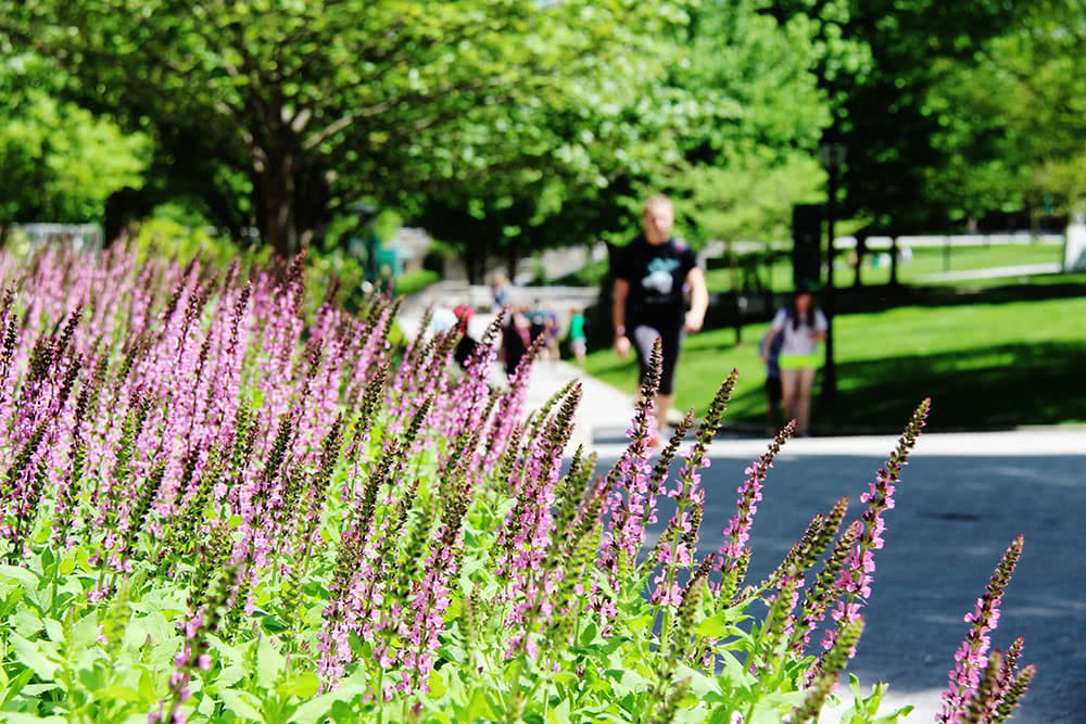Flowers in the foreground with students walking in the background